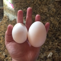 Left: chicken egg Right: duck egg