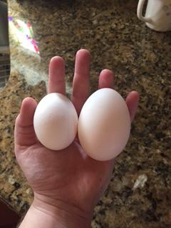 Left: chicken egg Right: duck egg